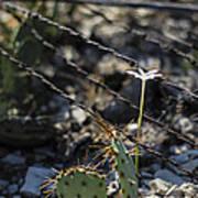 A Flower Among Thorns Art Print