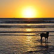 A Mans Best Friend Sunset Art Print