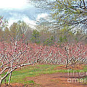 A Peach Orchard   Art Print