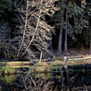 Alder Tree Reflection In Pond Art Print