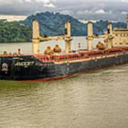 Avocet In The Panama Canal Art Print