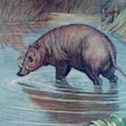 (babirusa Alfurus)        Date 1909 Art Print