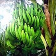 Banana Plants Art Print
