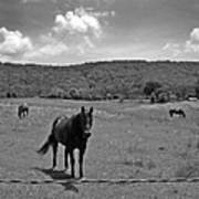 Black And White Pasture With Three Horses Art Print