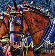 Budwieser Clydesdale Art Print