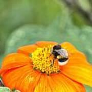 Bumble Bee 01 Art Print
