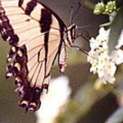 Butterfly Meets Flower Art Print