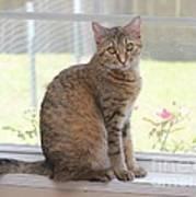 Cat In The Window Art Print