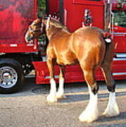Clydesdale At Esp Art Print