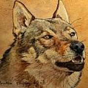 Czechoslovakian Wolfdog Portrait Art Print