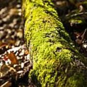 Dead Log With Moss Art Print