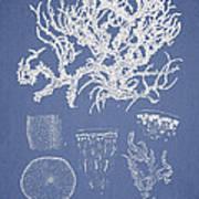 Eucheuma Spinosum Art Print by Aged Pixel
