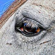 Eye Of A Horse Art Print