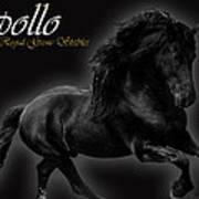 Friesian Stallion Art Print