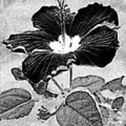Hibiscus Art Art Print
