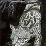 Jaguar Or Jacaranda  Art Print