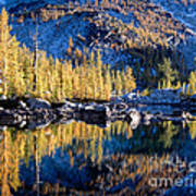 Larch Tree Reflection In Leprechaun Lake Art Print