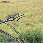Leopard Cub In Serengeti Art Print