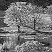 Long Pond On Mount Desert Island In Maine Art Print