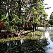 Magnolia Plantation Gardens Art Print
