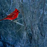 Northern Cardinal Art Print by Thomas Young