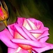 Painted Pink Rose Art Print