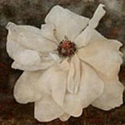 Perennial Gardens - Fall #02 Art Print