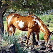 Pinto In The Pines Art Print