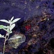 Semi Abstract Nature 2 Art Print