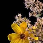Shy Yellow Flower Art Print