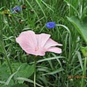 Softly Single New Pink Bloom Art Print