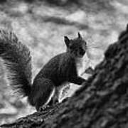 Squirrel In The Park V4 Art Print