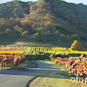 The Hills Of Clos La Chance Winery Art Print