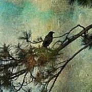 The Old Pine Tree Art Print