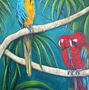 Three Is A Crowd,macaws Art Print