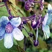 Wild Blue Rose Art Print