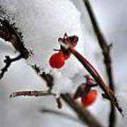 001 Frozen Berries Art Print