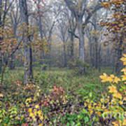 0133 Misty Meadow 2 Art Print