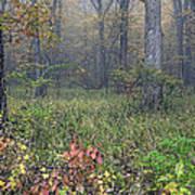 0134 Misty Meadow Art Print