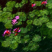0151-lily - Chalk 1 Sl Art Print