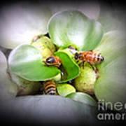 1 . 2 . 3 . Honeybees Art Print