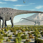 A Herd Of Diplodocus Sauropod Dinosaurs Art Print
