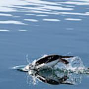 A Penguin Swims Through The Clear Art Print
