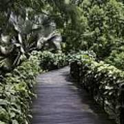 A Raised Walking Path Inside The National Orchid Garden In Singapore Art Print