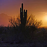 A Sonoran Morning  Art Print