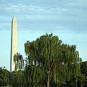 A Weeping Willow Washington Monument Art Print