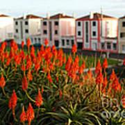 Aloe Flowers Art Print
