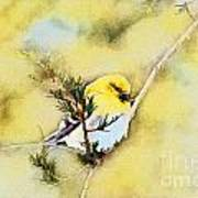 American Goldfinch - Digital Paint Art Print