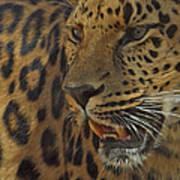 Amur Leopard 1 Art Print