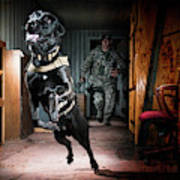An Air Force Security Forces K-9 Art Print